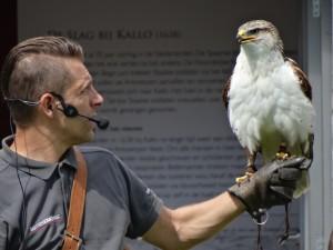 Falconers@Work - Pim met Koningsbuizerd
