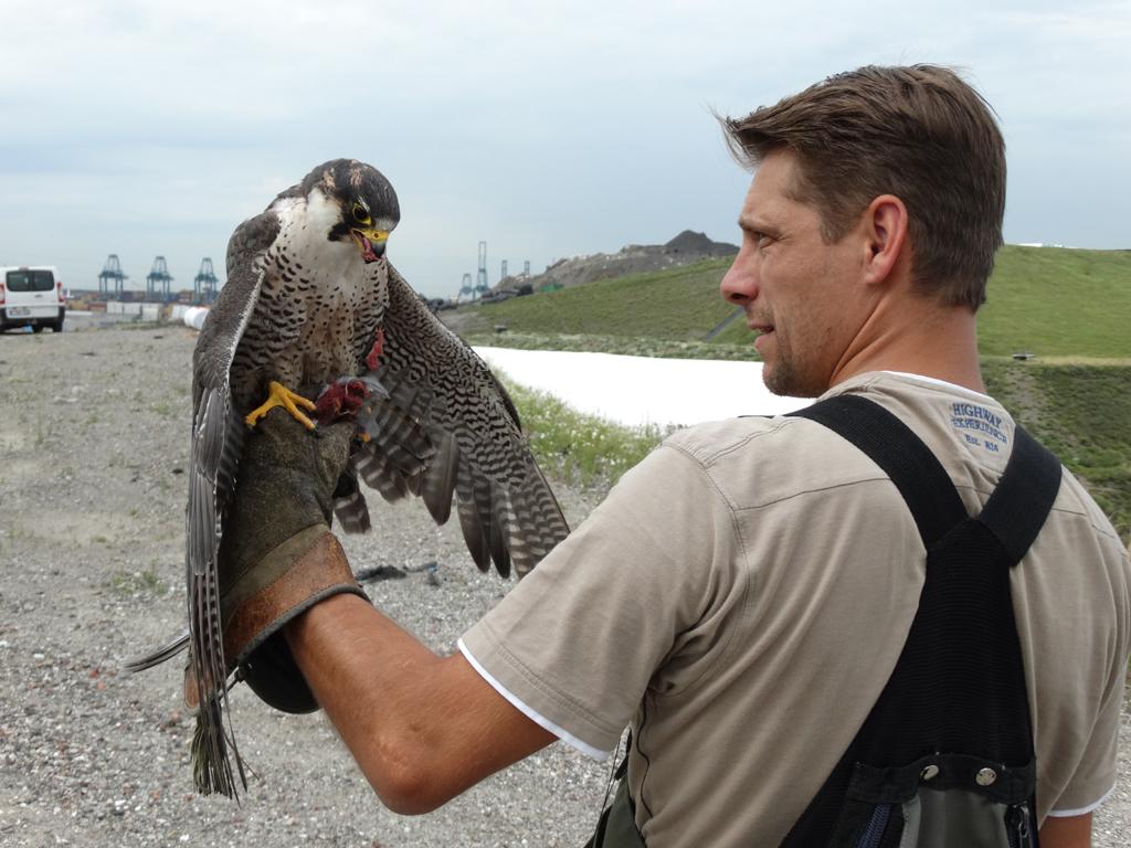 Falconers@Work - Pim met Tinkerbell