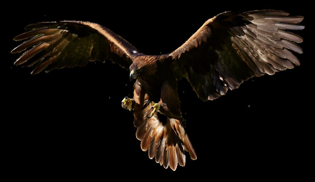 Falconers@Work - Foto van Arend